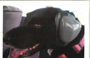 dog-#belicosa555