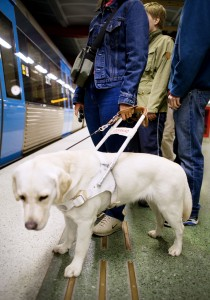 Accessibility-#belicosa555