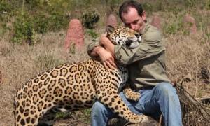 Jaguars-#belicosa555