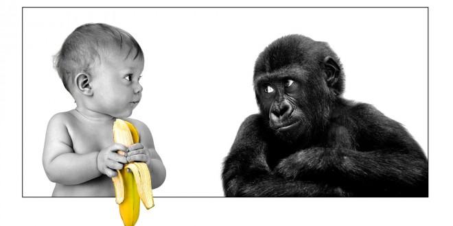 Conversa Sobre Macacos