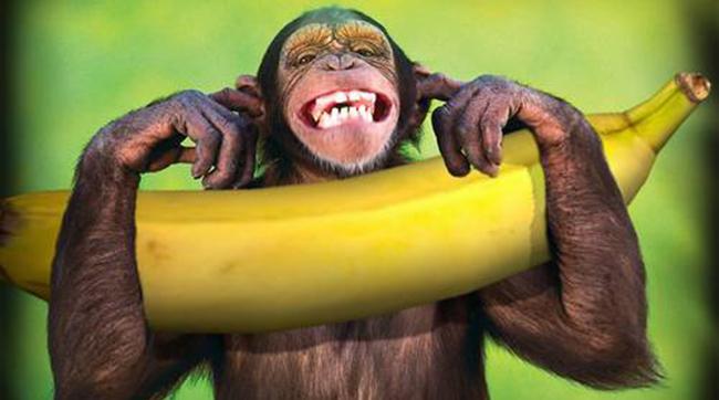 dieta-da-banana-macaco-#belicosa555