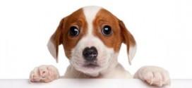 Não aos Maus Tratos aos Pets