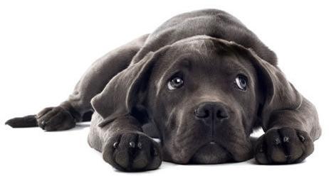 Dog-rescue-#belicosa55