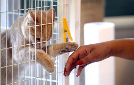 resgate-de-gato-#belicosa55