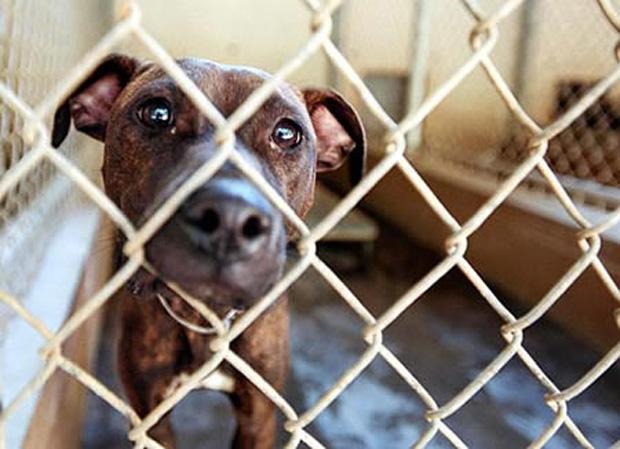rescue-dog-#belicosa55