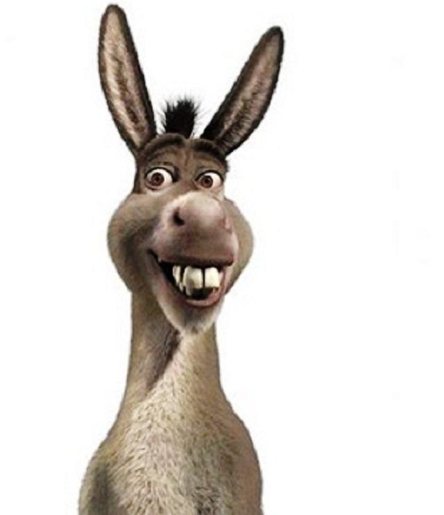 burro-shrek-#belicosa55