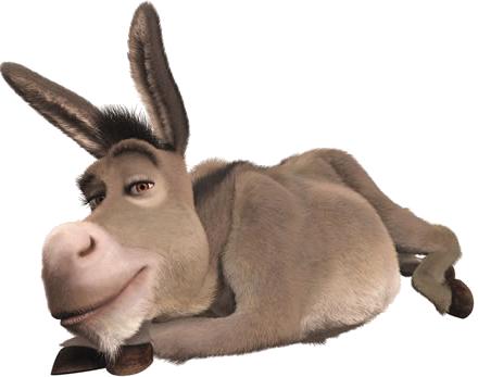 burro-#belicosa55