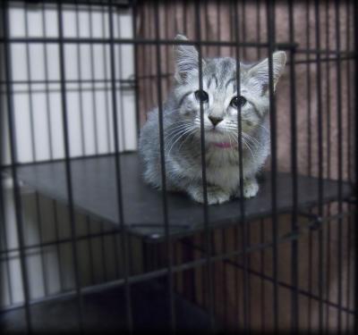 gato-petshop-#belicosa55