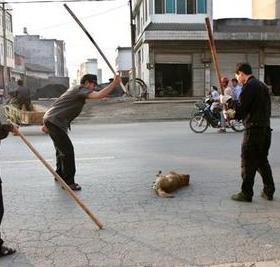 matando-cachorro-#belicosa555