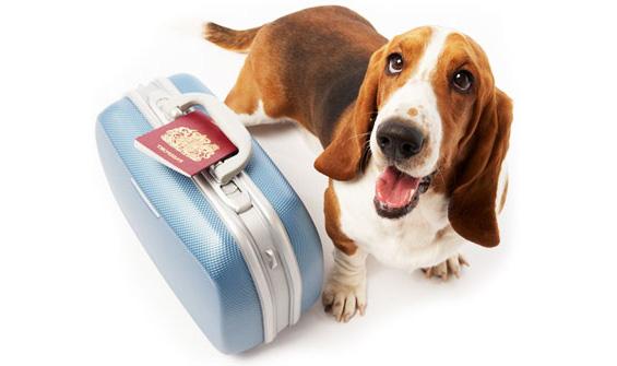 Como-Viajar-Com-o-Cachorro-#belicosa55