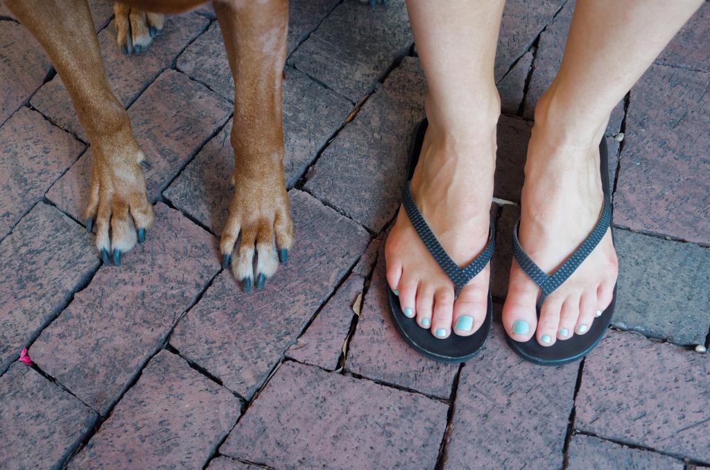 alex-beker-pes-patas-fotografias-cachorros-#belicosa55