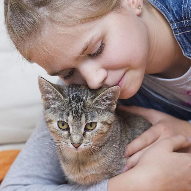 #belicosa55,gatos