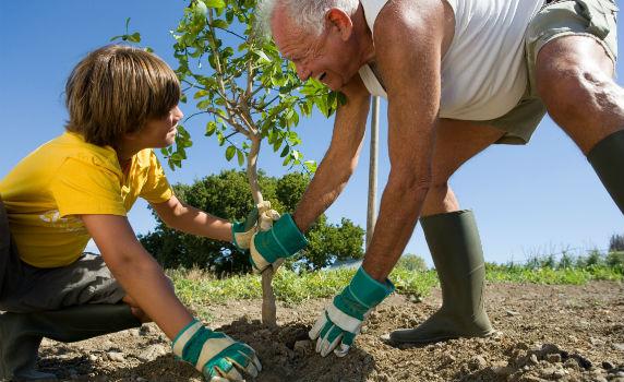 plantar-arvore-#belicosa55